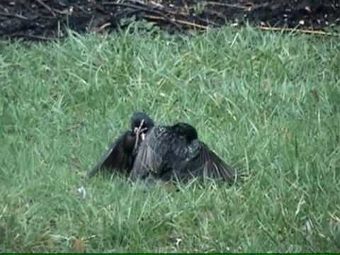 Funny Talking Animals Eric the Squirrel Episode 2 Bird Fight.wmv