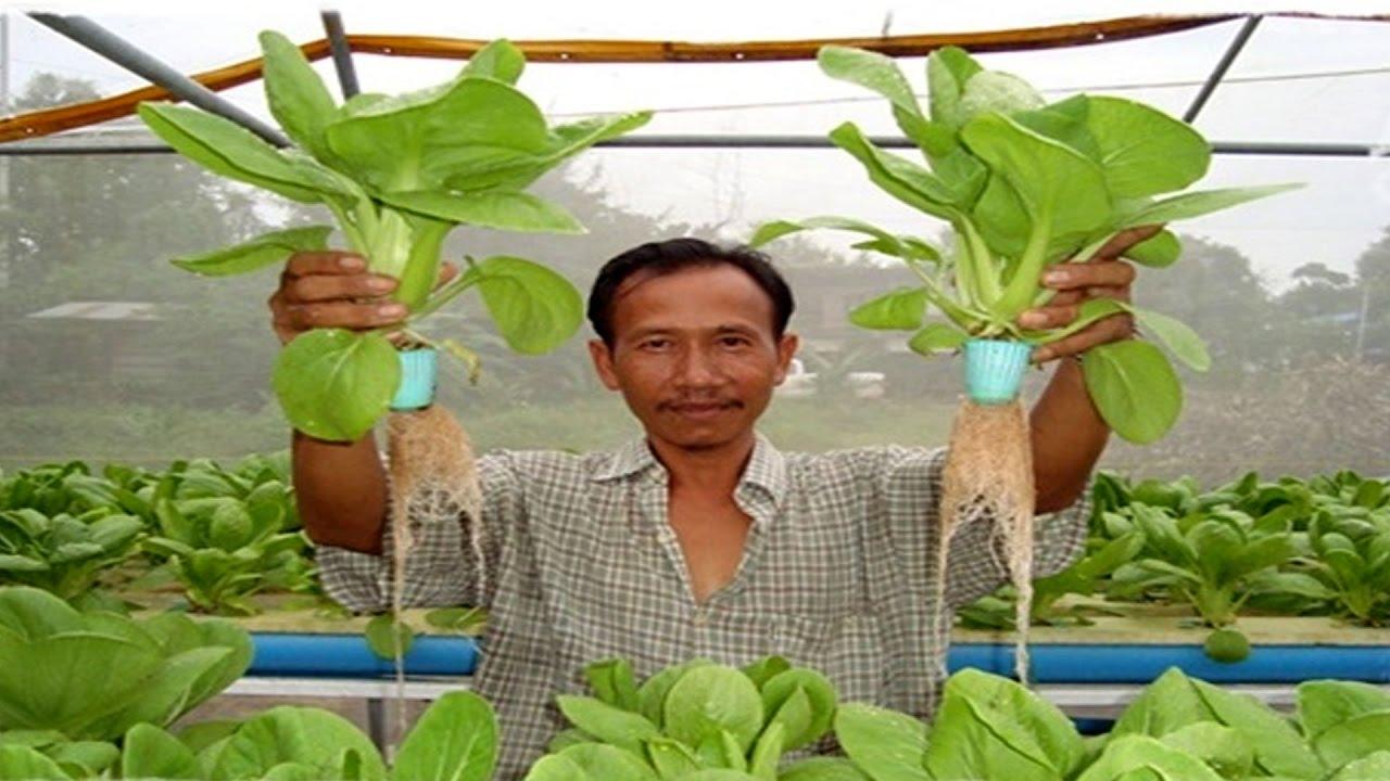 เกษตรแนวใหม่ | ปลูกผักไร้ดินอย่างง่ายในครัวเรือน