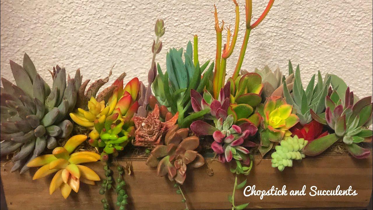 Succulent Arrangement Repurposed Fresh Flower Arrangement Youtube