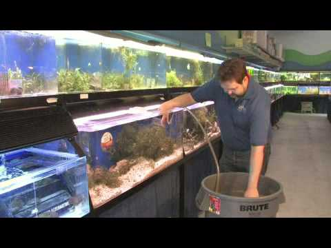 How to Clean a Saltwater Fish Tank