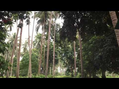 Property of Villa Escadero, Tiaong, Quezon, (Luzon) Philippines (2)