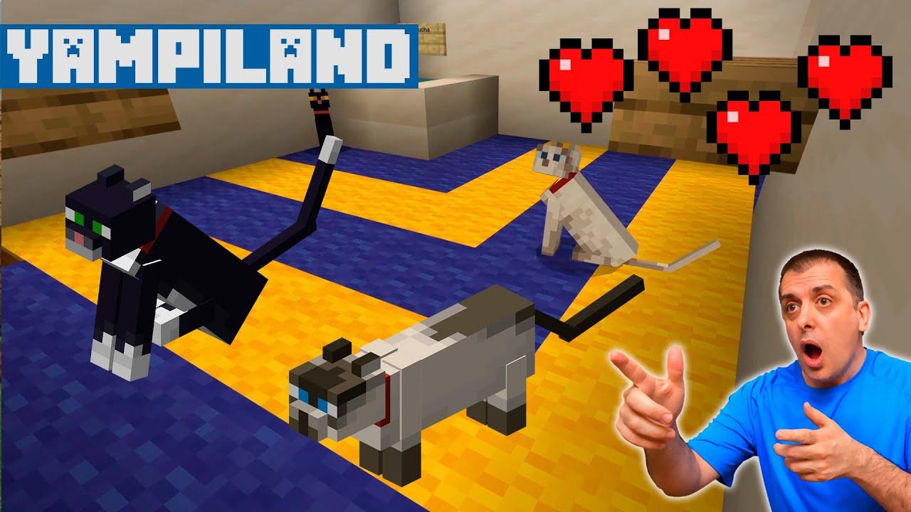 Download Construimos la habitación de ABY para sus gatos en YAMPILAND
