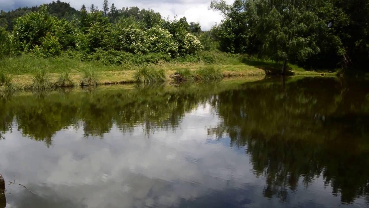Kněžice - Panenský potok - rybářský revír 441 080