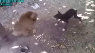 WhatsApp funny video :Monkey dog