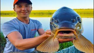 Карп чуть не утащил спиннинг Рыбалка мечта Ловля карпа и амура на орехи Рыбалка с ночёвкой