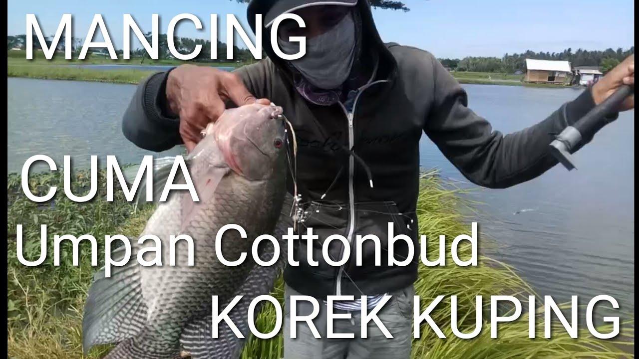 Mancing Umpan Cottonbud Korek Kuping Mantap Youtube