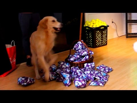 PUPPY OPENING CHRISTMAS PRESENTS! (Super Cooper Sunday #43)