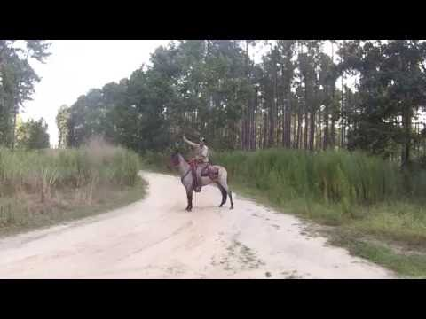 Shooting in the saddle on Marsh Tacky Buckwheat ( FOR SALE )