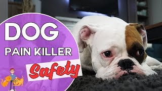 Are Pain Killers Safe for Dogs?  (side effects and reducing the risk)
