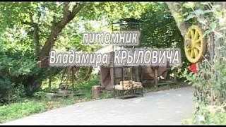 Cаженцы плодово ягодных культур krylovich.by