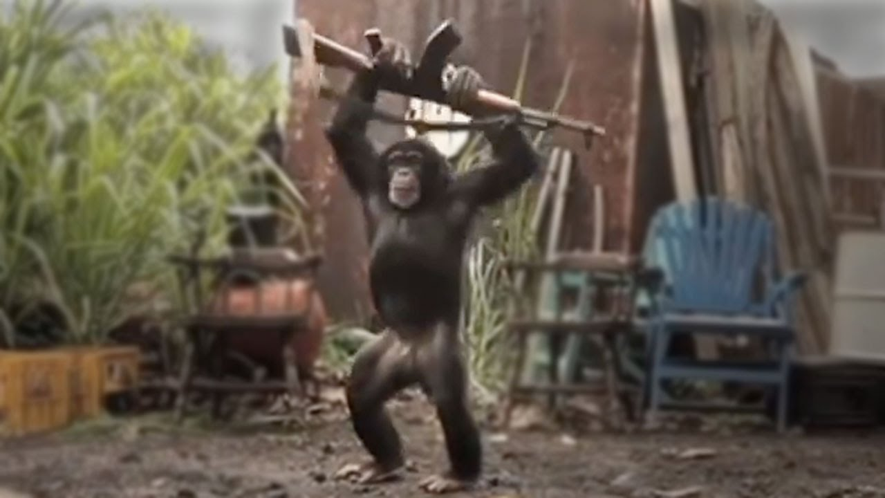 chimp with a machine gun