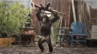 CHIMP WITH ASSAULT WEAPON - real or fake?
