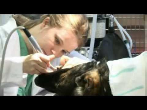 I-20 Animal Medical Clinic Tour