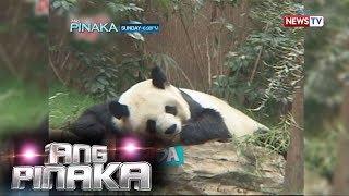 Ang Pinaka: Antukin na animals