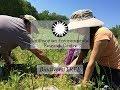view BiodiversiTREE--2017 Citizen Science Newsletter digital asset number 1