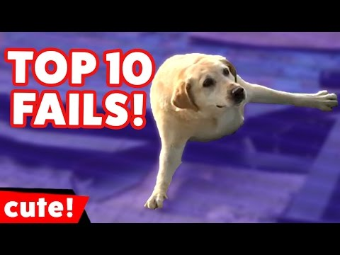 Top 10 Funniest Animal Fails Compilation December 2016 | Kyoot Animals