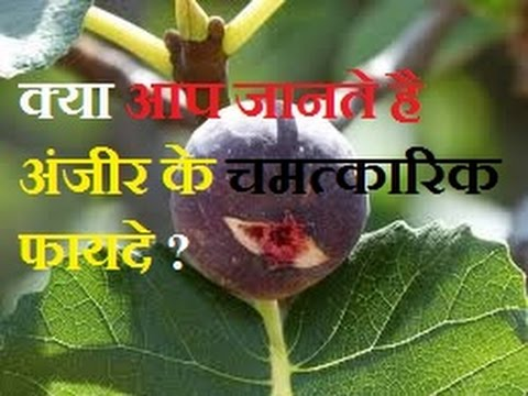 ????? ???? ??  ?????-BENEFITS OF FIG IN HINDI-HEALTH BENEFITS OF FIG(ANJEER) IN HINDI