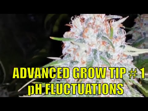 CANNABIS ADVANCED GROW TIP.  pH FLUCTUATIONS