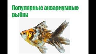 Популярные Аквариумные Рыбки,  Названия,  Фото &  Аквариумные Рыбки Для Новичков. Ветклиника Био Ве
