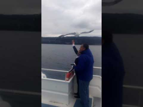 Bariloche, foto con gaviota en catamaran