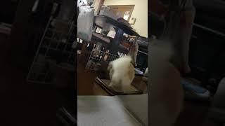 音楽と共に回り続ける犬