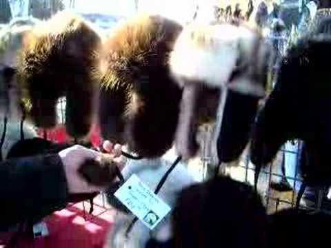 Iditerod: Alaska Hats
