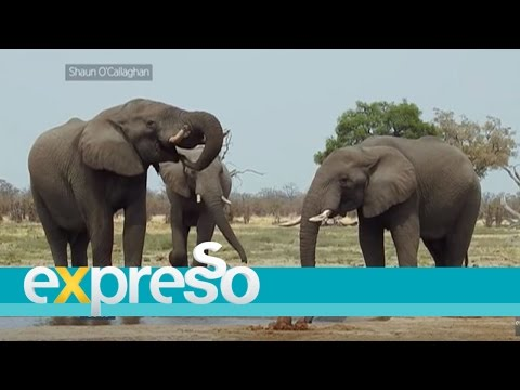 African Travel – Experience Botswana with Dasconnexion