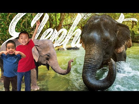 Bathing with Elephants!! Elephant Jungle Sanctuary Phuket Thailand: Travel with Kids