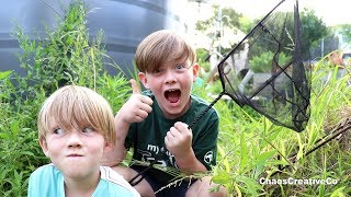Catching Bugs in the Backyard - Catch Grasshoppers, Spiders and Praying Mantis in net - Bug Catcher