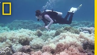 The Great Barrier Reef May Be Dying Faster Than We Thought | National Geographic