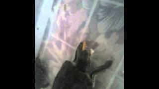 Tortuga comiendo gusanos