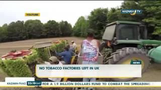 No tobacco factories left in UK - Kazakh TV