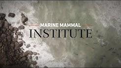Marine Mammal Institue