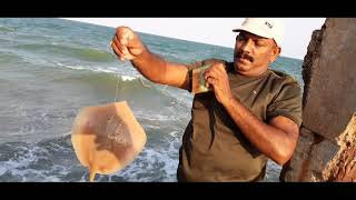 Sea fishing, catching for Stingray fish & sea small fishes