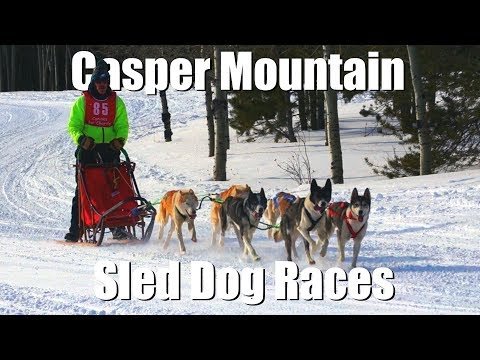 Casper Mountain Sled Dog Races - Vlogging Wyoming 24