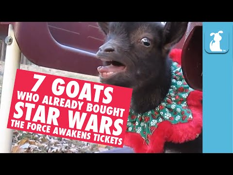 7 Goats Who Already Bought Star Wars Tickets