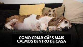Como ter cães mais calmos dentro de casa
