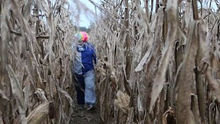KILLER CLOWN CHASES US THROUGH CORNFIELD!