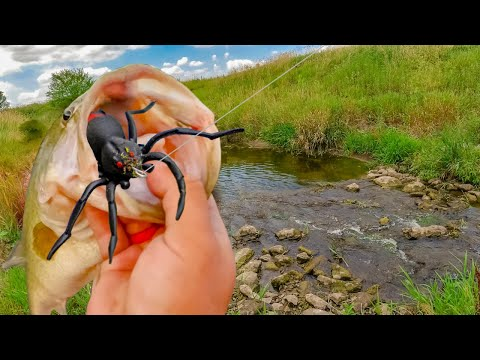 Bass Eat SPIDERS??? SURPRISING Test Fishing NEW Spider Topwater!