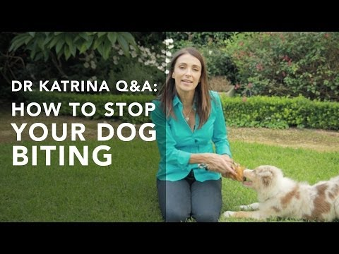 how-to-stop-my-puppy-from-biting-me?-q&a's-with-dr-katrina