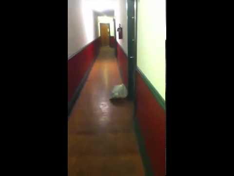 Girl nextdoor gets loud from YouTube · Duration:  31 seconds