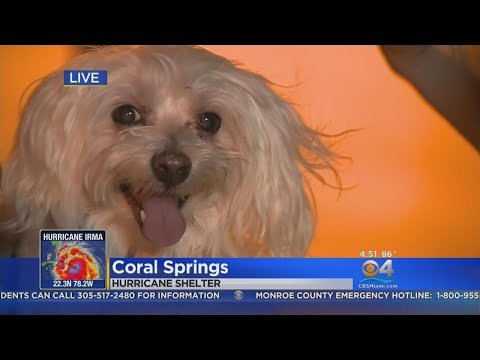 Coral Springs Shelter Manager: 'It Was A Challenge'