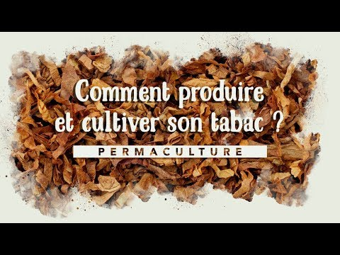 Comment produire et cultiver du tabac à la maison ?