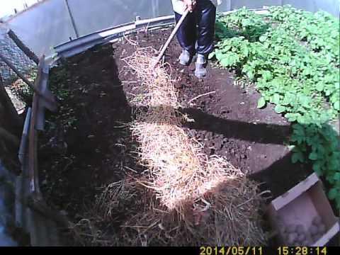 видео: Самый легкий способ сажать картофель.the easiest way to plant potatoes.