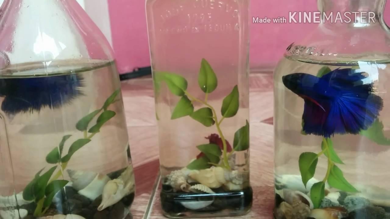 Beauty Hickey Ornamental Fish Aquarium Bottle