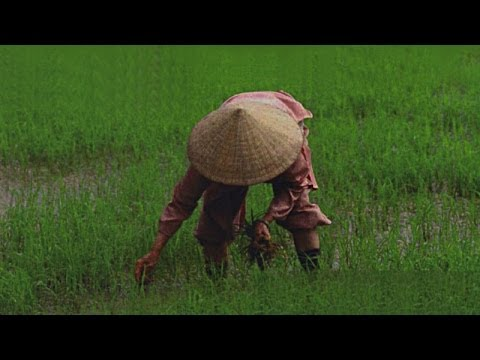 Surprising Vietnam HD