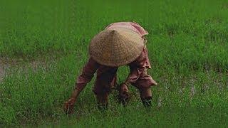 Surprising Vietnam HD