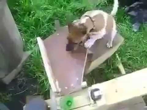 0 Cachorro usando uma catapulta pra arremessar uma bola