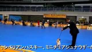 11月9日メディアドームで開催されていたドッグショーを見てきました。 ...