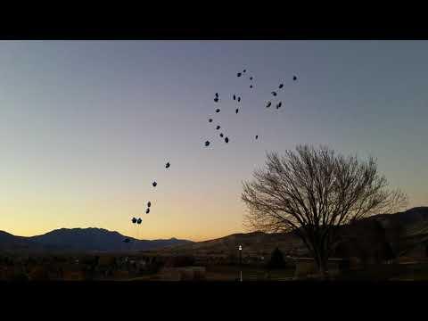 Balloons to Heaven  Tenzin Christopher Rich
